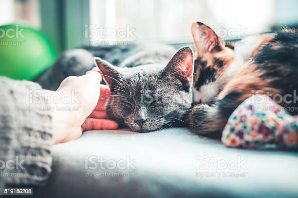 Two cats lying comfortably on the window sill picture id519186208?b=1&k=6&m=519186208&s=612x612&h=hj9dcfa15hjdij1sjhya1tynuuzybqc8xj idbeiiqc=