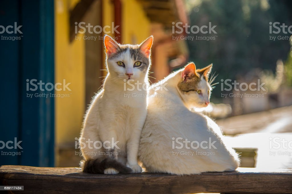 Two cats lying on the sun stock photo