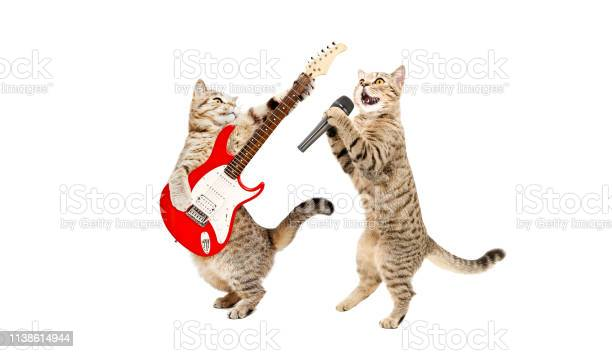 Two cats musician together isolated on a white background picture id1138614944?b=1&k=6&m=1138614944&s=612x612&h=fcqha8hmfuwr3zr5phzfbqk5tqd d hqanrizfizmei=