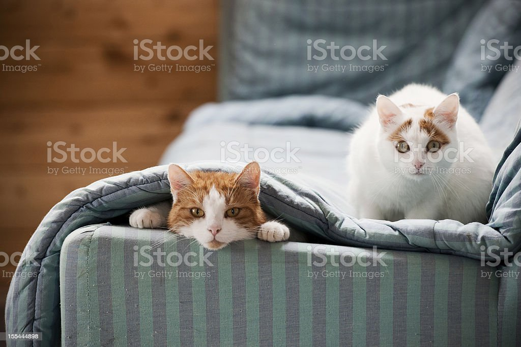 Two cats on sofa stock photo