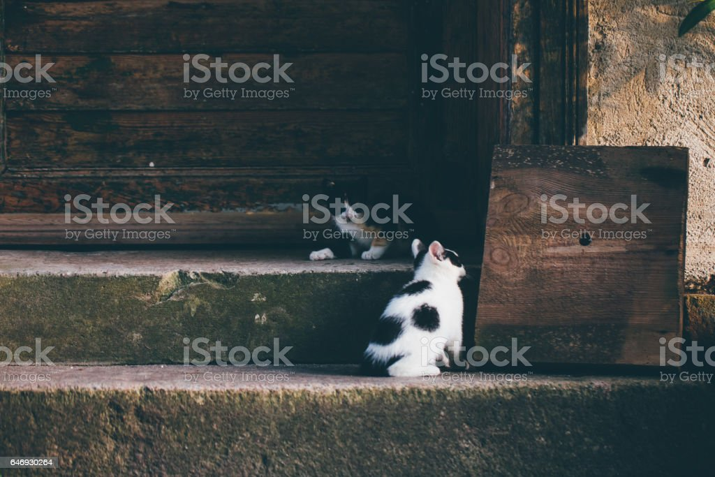 Two cats on the stairs stock photo