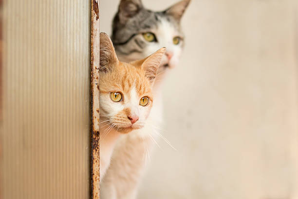 Two cats peeking in the same direction​​​ foto