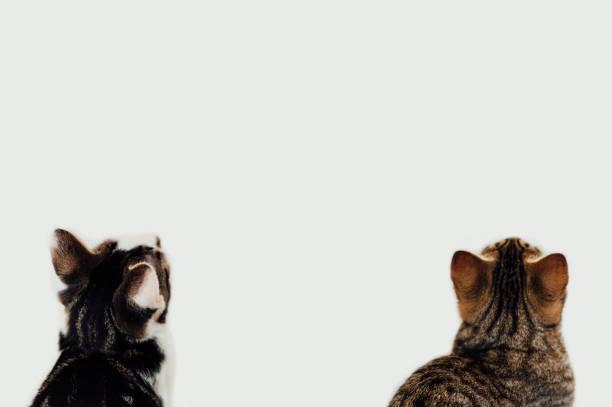 Two cats picture id1132999556?b=1&k=6&m=1132999556&s=612x612&w=0&h=quu05guxpjdllh5nbxdmwpsr cvzpdxmy11fhwnjzxo=