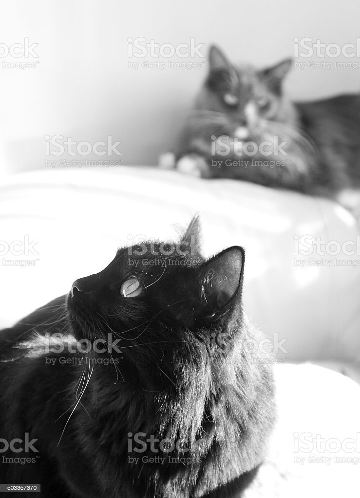 Two Cats stock photo
