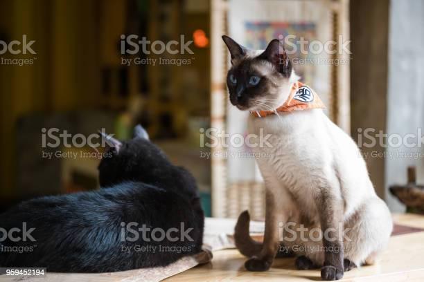 Two cats playing picture id959452194?b=1&k=6&m=959452194&s=612x612&h=6xdogppp1jjsr8be5yjk y0s t6np9fkc8xjeyztjmw=