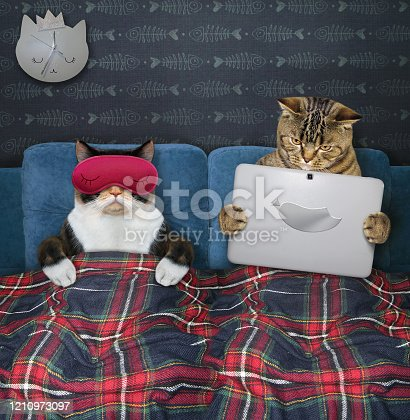 539672394 istock photo Two cats resting in bed 2 1210973097