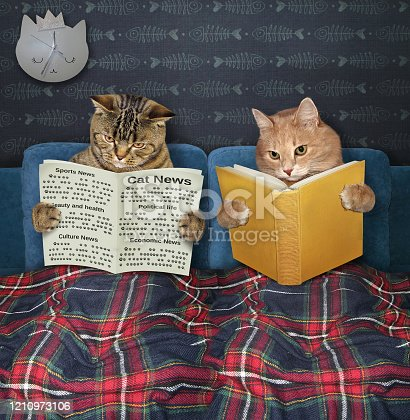 Two cats are resting in bed under a plaid blanket in the bed room at home. One of them is reading a newspaper and the other is holding a book.
