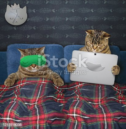 539672394 istock photo Two cats resting in bed 1212518035