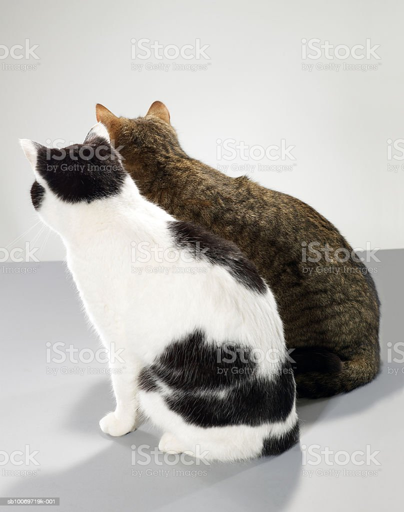 Two cats sitting side by side, rear view royalty-free stock photo