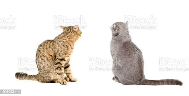 Two cats sitting together back view picture id926093114?b=1&k=6&m=926093114&s=612x612&h=ahtcn 5lg6zeq1kdmqr9dlb3510tj2ctf08z7zqgefe=