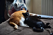 istock Two cats sleeping together on a bed 1281406061