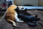 istock Two cats sleeping together on a bed 1281406113