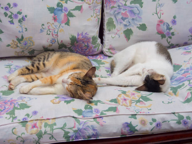 Two Cats Sleeping Together stock photo