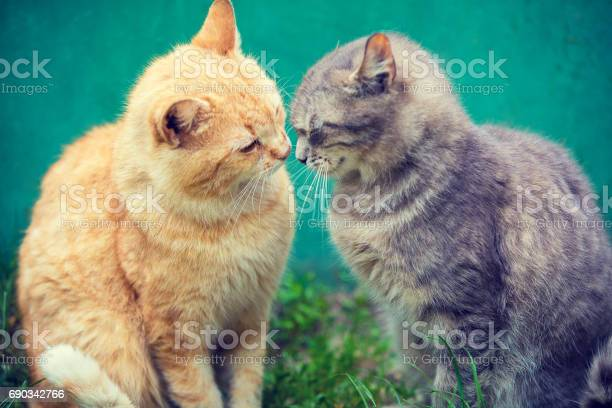 Two cats sniffing to each other outdoor picture id690342766?b=1&k=6&m=690342766&s=612x612&h=wmcdovqljar vzagesbkowoxccthctwtj8crhq7wmpk=