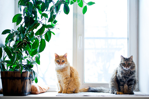 Two cats with house plant