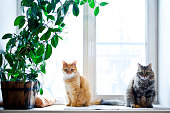 Two cats sitting on the windowsill with potted house plant.
