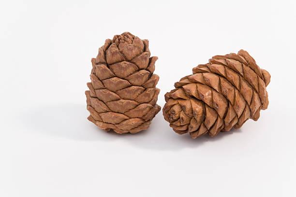 Zwei cedar Hütchen – Foto