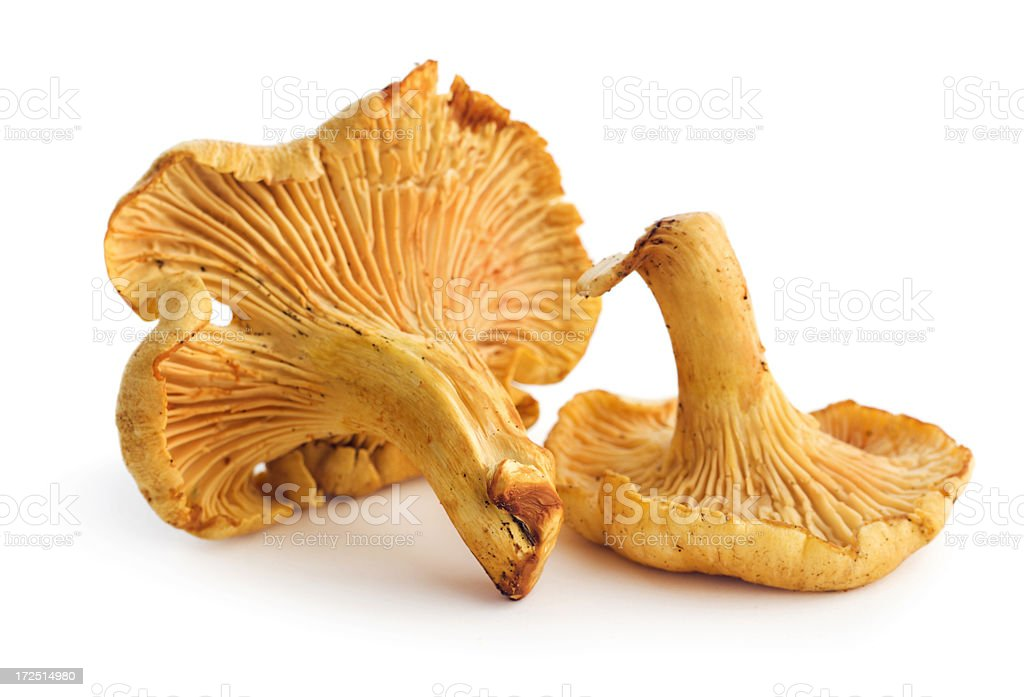 Two Chanterelle Mushrooms, an Edible Fungus Vegetable, Isolated on White stock photo