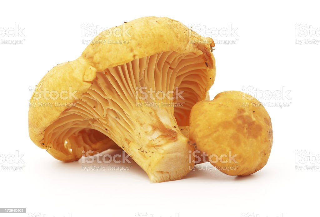 Two chanterelle mushrooms isolated in white stock photo