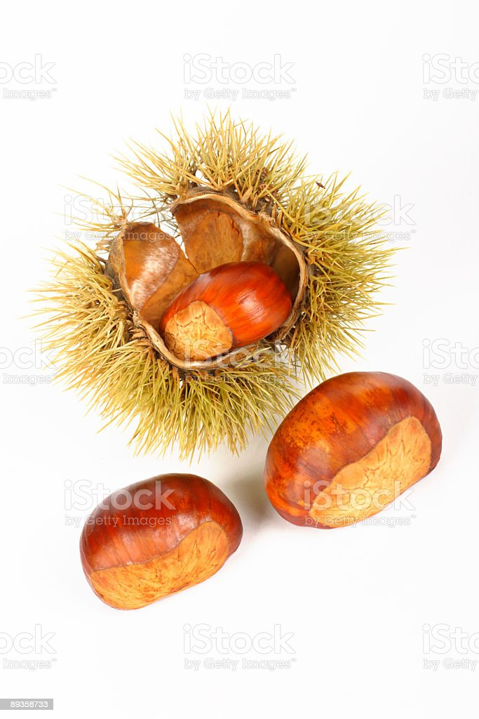 Two chestnuts and open spiny curl royalty-free stock photo