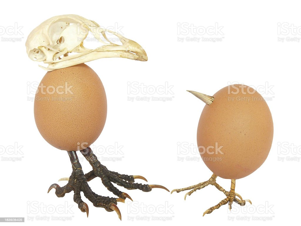 Two chicken eggs as birds royalty-free stock photo