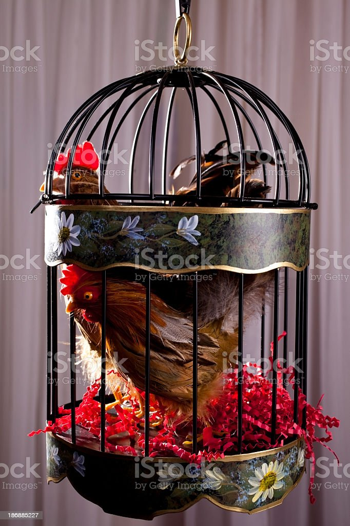 Two chickens in bird cage royalty-free stock photo