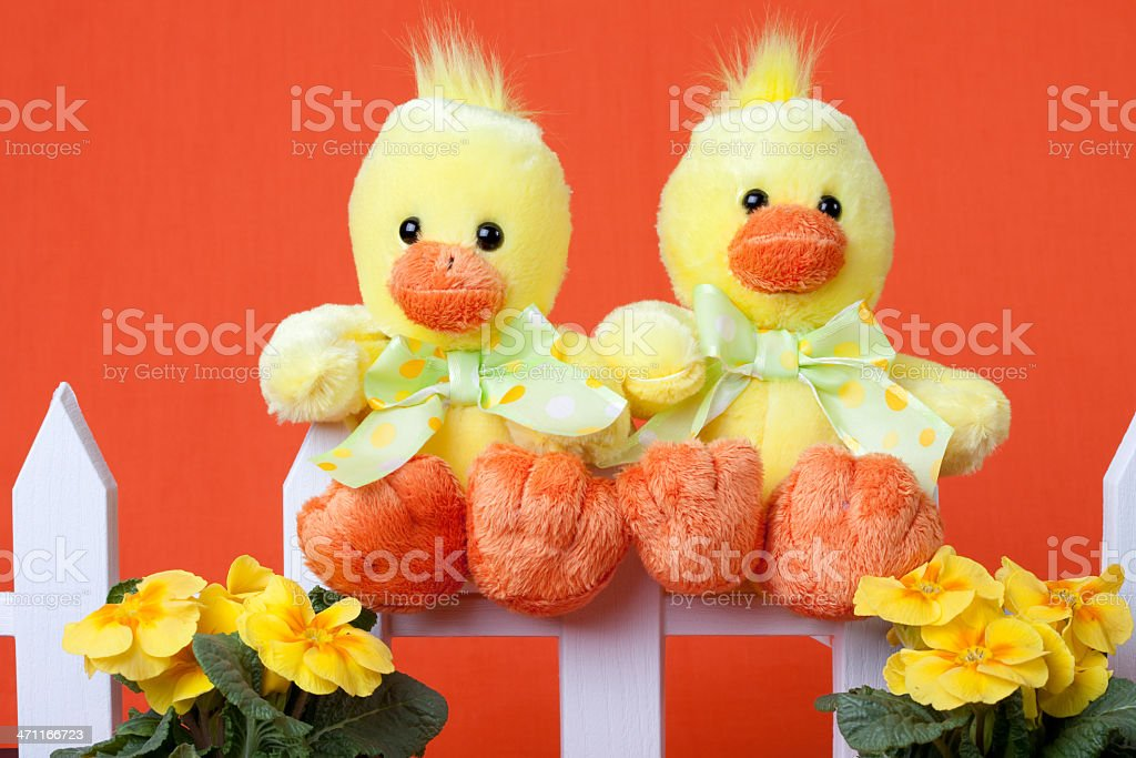 Two chicks on a fence stock photo