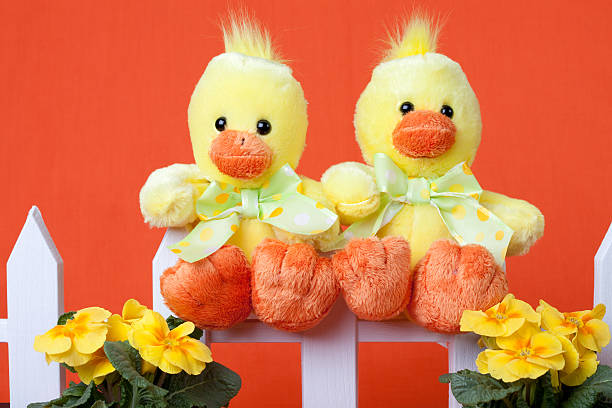 two chicks on a fence - spring stock photos and pictures