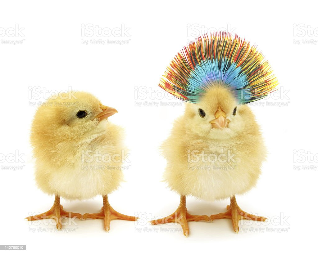 Two chicks one crazy stock photo