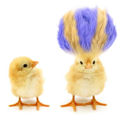Foto de Two Chicks One Crazy With Even Crazier Hair e mais fotos de stock de Amarelo