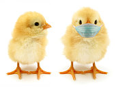 istock Two chicks only one with face mask often epidemic scene 1280065722