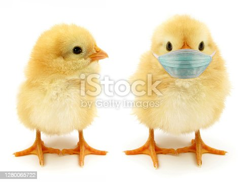 Here are two chicks. Which one is responsible?