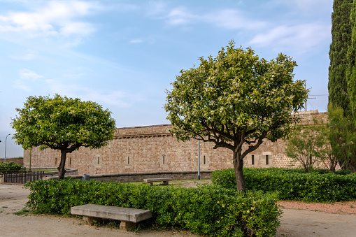 Two Citrus trees and a stone bench in the park