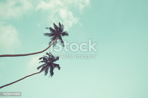 Two coconut palm trees hanging over sky background vintage color toned