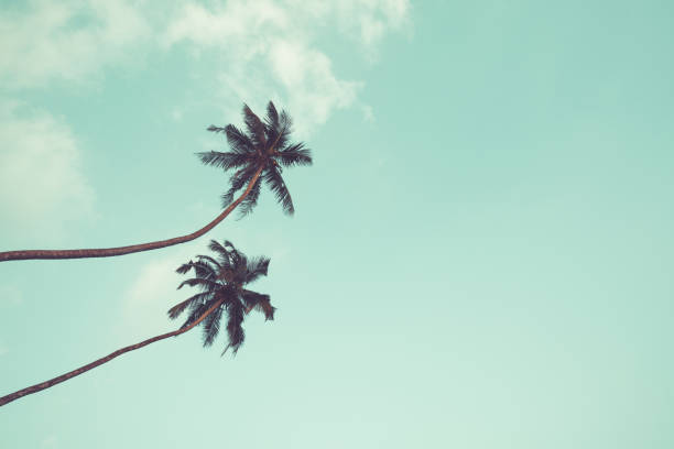 Two coconut palm trees vintage toned picture id1023414432?b=1&k=6&m=1023414432&s=612x612&w=0&h=0vxgdaiwuy6itognruqj2 vma4qyllueshrs5bdiagm=