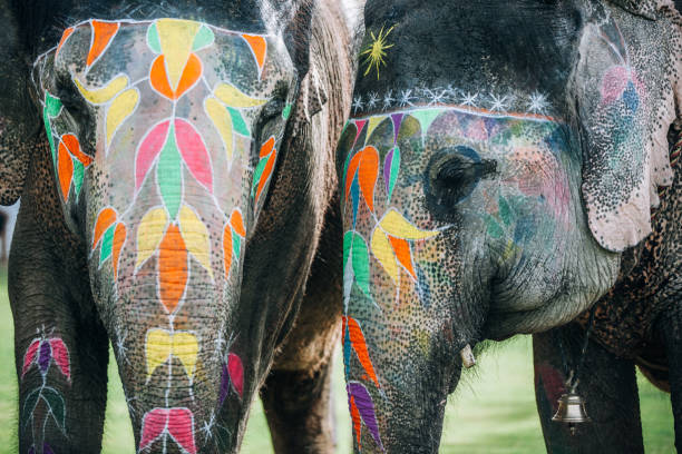 Two colorful elephant face painted and decorated. Jaipur, Rajasthan, India stock photo
