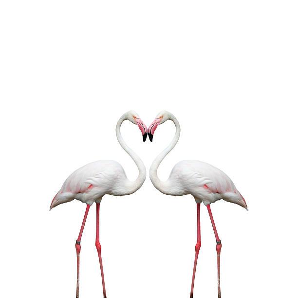 Two colorful flamingos stock photo