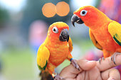 two colorful parrot standup in hand tourist with blur background