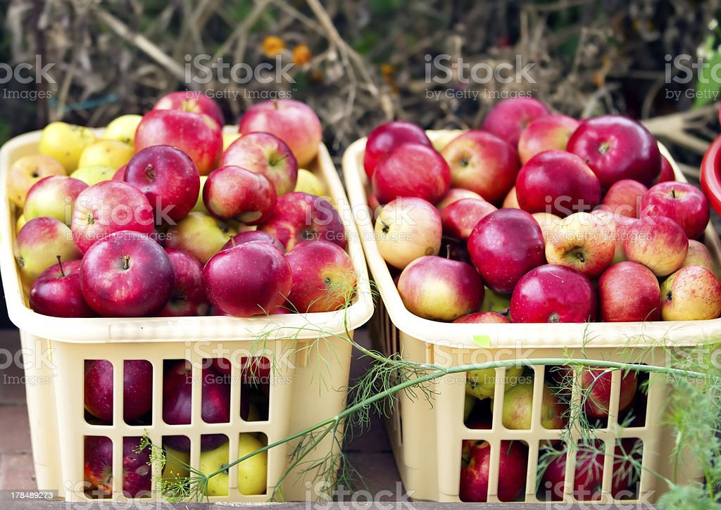 Two containers with apples royalty-free stock photo