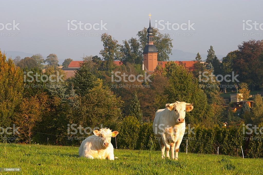 Due mucche nel villaggio - foto stock