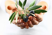 istock Two cupped hands offering olive branch 173634325