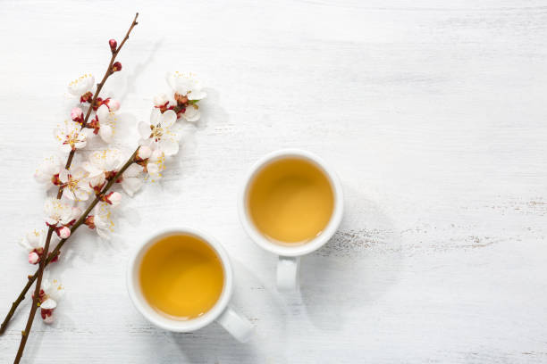 Two cups of green tea and  branches of blossoming apricot  on  old wooden shabby background stock photo