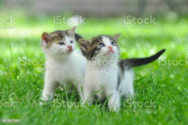 Two curious little kittens play in the grass picture id817647052?b=1&k=6&m=817647052&s=612x612&h=607icoyzwov3b5ps8u40p p5lfp7rqwxexjc0dj8ot8=