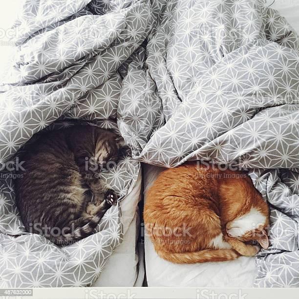Two cute cats sleeping in bed picture id487632000?b=1&k=6&m=487632000&s=612x612&h=qvz8i 69pvpbgkdpgneiwrtkp2vimf3kbysgdaceg q=