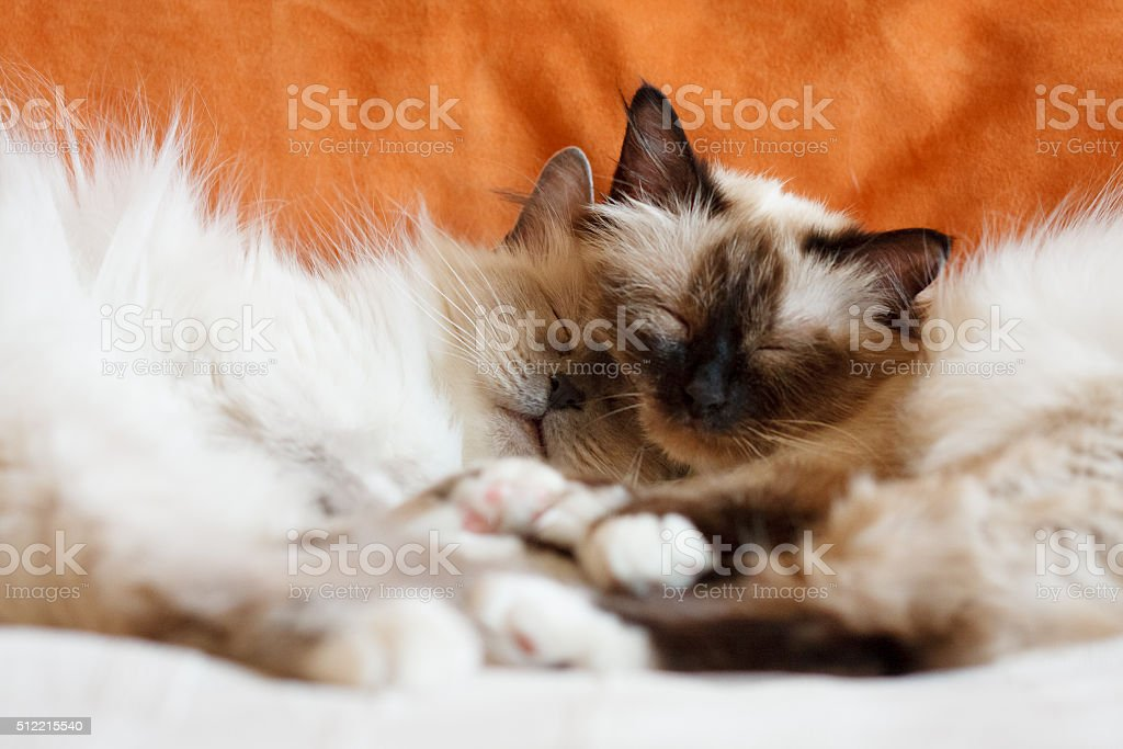 Two cute cats sleeping stock photo
