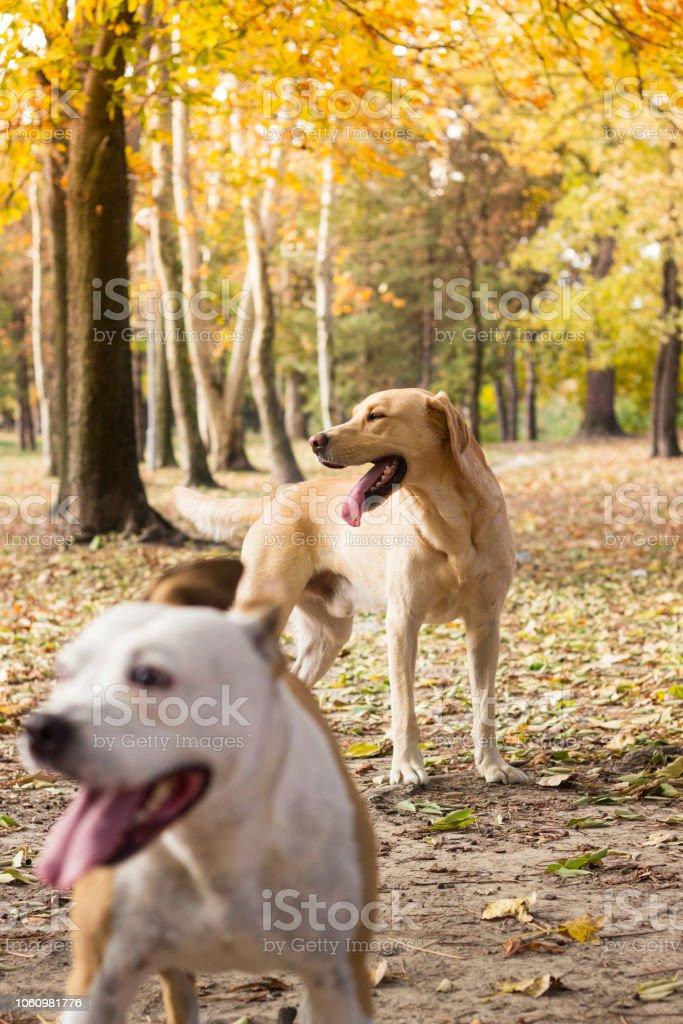 Two cute dog friends, blur background