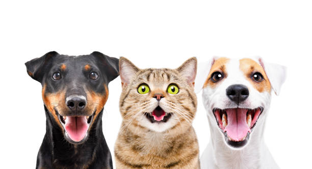 Two cute dogs and funny cat isolated on white background picture id1180215437?b=1&k=6&m=1180215437&s=612x612&w=0&h=ghqg95miqiuqf2rjqdhnxnlq2igv21x yjy3qngcica=