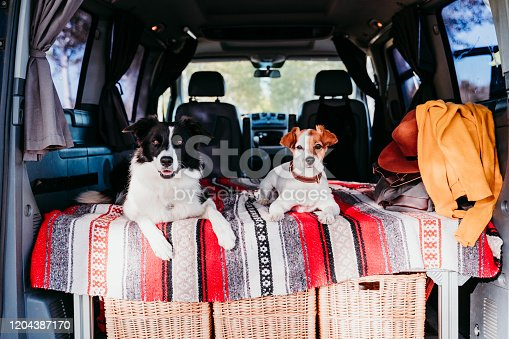 885056264 istock photo two cute dogs in a van, border collie and jack russell relaxing. travel concept 1204387170
