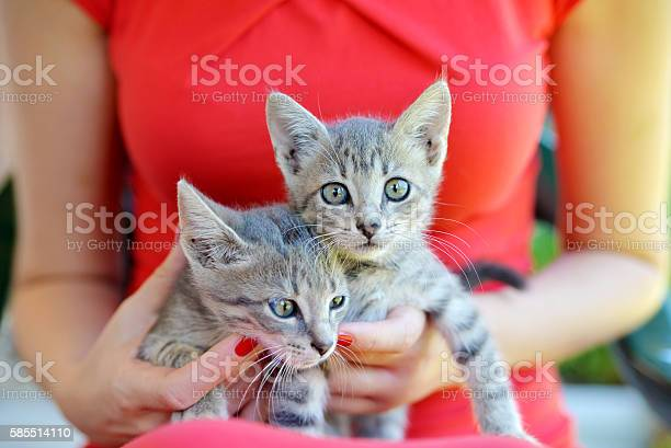 Two cute domestic short hair cats picture id585514110?b=1&k=6&m=585514110&s=612x612&h=rg4vntswtluabmnshi4ump9fm7z25wrbeuvoqk0vluc=