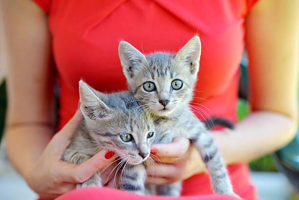 Two cute domestic short hair cats picture id585514110?b=1&k=6&m=585514110&s=612x612&w=0&h=pqiezwgi5mrphq4ijancenxyx45aarqi5vapvzgfbcw=